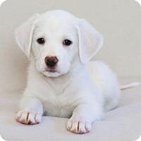 Adopt A Pet :: Willa Cather - Berkeley Heights, NJ