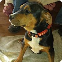 Adopt A Pet :: Leather - Morganville, NJ