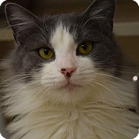 Adopt A Pet :: Freddy - Denver, CO
