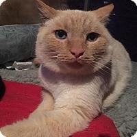 Adopt A Pet :: Eddie Finito - Tega Cay, SC