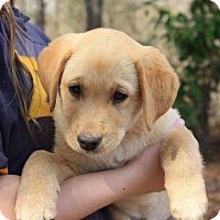 Adopt A Pet :: Marley - Auburn, MA