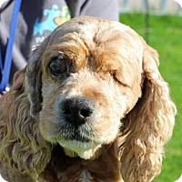 Adopt A Pet :: Brandee - Palm Springs, CA