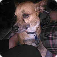 Adopt A Pet :: Bentley - Greenville, OH