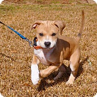 Adopt A Pet :: Lucy - Middletown, RI
