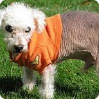Adopt A Pet :: Newton - Madison, WI