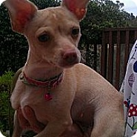 Adopt A Pet :: Scarlett - Encinitas, CA