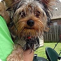 Adopt A Pet :: Eddie - Baton Rouge, LA