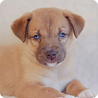 Adopt A Pet :: Piper - Knoxville, TN
