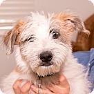 Adopt A Pet :: Tuck