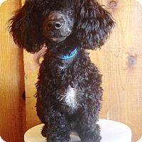 Adopt A Pet :: Holy Toledo ! - Van Nuys, CA