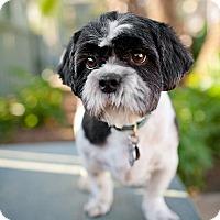 Adopt A Pet :: BERKELEY - Los Angeles, CA