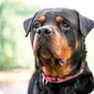 Adopt A Pet :: Machado