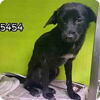 Adopt A Pet :: IVY - San Antonio, TX