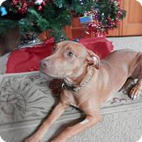 Adopt A Pet :: Punkin - Huntsville, MO