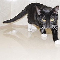 Adopt A Pet :: Martina - Walnut Creek, CA