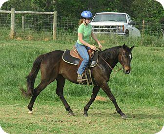 Thoroughbred for adoption in Seneca, South Carolina - Wonder $2000