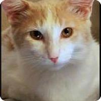 Adopt A Pet :: Beau - Encino, CA