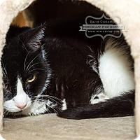 Adopt A Pet :: Henry- $25 adoption - Monterey, VA