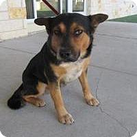 Adopt A Pet :: Dillon (Dylan)  $20 - North Richland Hills, TX