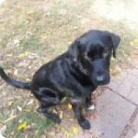 Adopt A Pet :: Astro - Medford, MA
