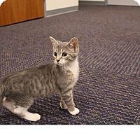 Adopt A Pet :: Blossom - Sparta, NJ