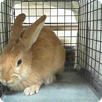 Adopt A Pet :: *DANIEL - Las Vegas, NV