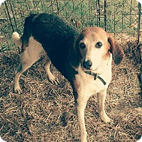 Adopt A Pet :: Uncle Fester - Sweetwater, TN