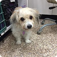 Adopt A Pet :: Allie - Thousand Oaks, CA