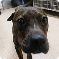 Adopt A Pet :: China - Saginaw, MI