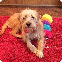 Adopt A Pet :: Webster - Woonsocket, RI