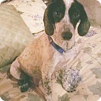 Adopt A Pet :: Annie - Charlestown, RI