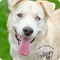 Adopt A Pet :: Rosalee - Scottsdale, AZ