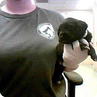 Adopt A Pet :: HONEY - Conroe, TX