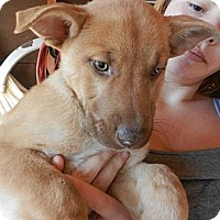 Adopt A Pet :: Bella - South Jersey, NJ