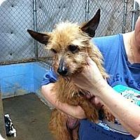 Adopt A Pet :: Precious - Conyers, GA