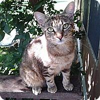 Adopt A Pet :: Alvin - Andover, KS