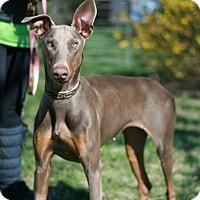 Adopt A Pet :: Darla--adopted!! - New Richmond, OH