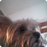 Adopt A Pet :: Charolette - Lorain, OH