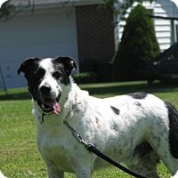 Adopt A Pet :: Petey - Fremont, OH