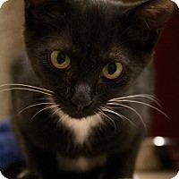 Adopt A Pet :: Skittles - Richmond, VA