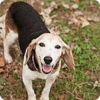 Adopt A Pet :: Fiona - Louisville, KY