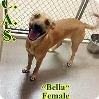 Adopt A Pet :: 2-2 Bella - Triadelphia, WV