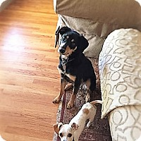 Adopt A Pet :: Percy and Oliver - Los Banos, CA