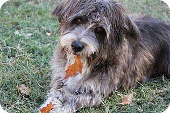 Terrier (Unknown Type, Medium) Mix Dog for adoption in Chandler, Arizona - HARVEY