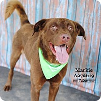 Adopt A Pet :: MARKIE - Conroe, TX