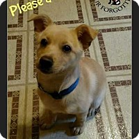 Adopt A Pet :: Buttercup - South Mills, NC