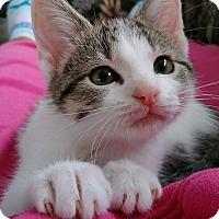 Adopt A Pet :: Sylvester - Austintown, OH