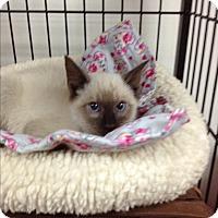 Adopt A Pet :: Ming - Tehachapi, CA