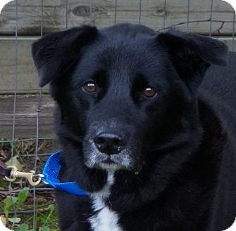 Labrador Retriever Mix Dog for adoption in Minnetonka, Minnesota - Shadow