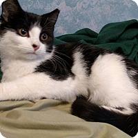 Adopt A Pet :: Maggie Mae - Stafford, VA